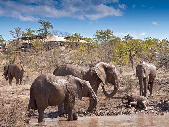 Big 5 Safari – Buffalo