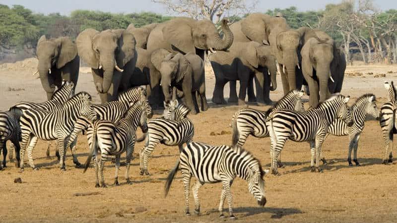 Hwange National Park Accommodation