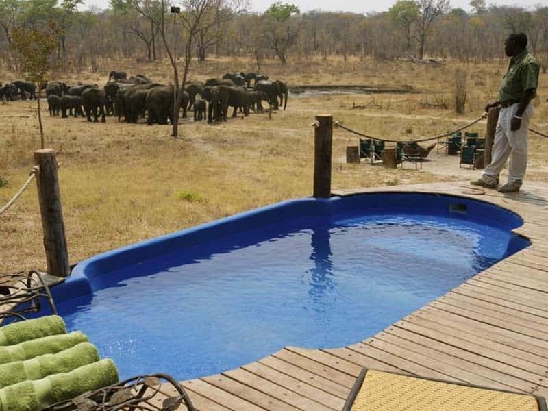 Khulu Ivory Elephants
