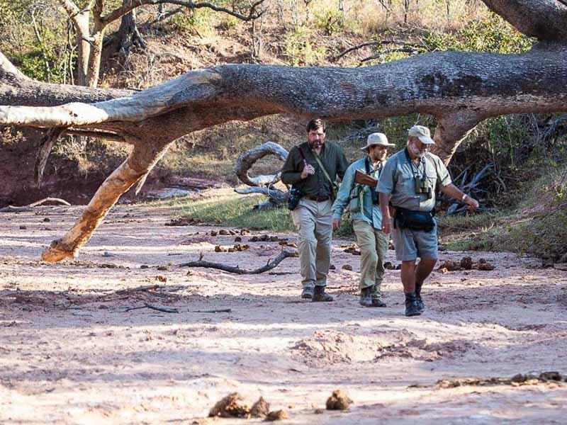 Musango Safari Camp Walking Safari