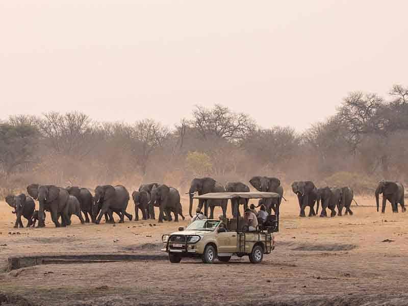 The Hide Safari Camp Elephants