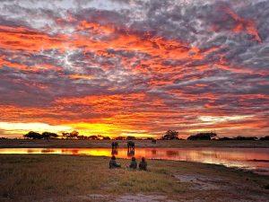 Safaris in Zimbabwe